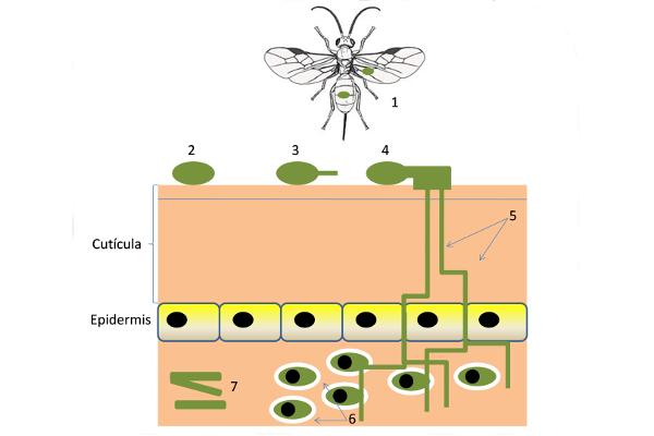 AGR-163. Entomología Agrícola